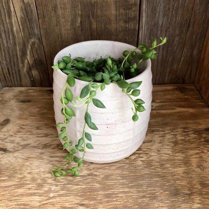 Mimipots pot de béton plante